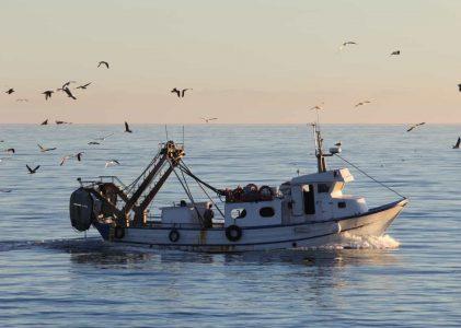 FundoPesca acionado para um total de 650 pescadores açorianos