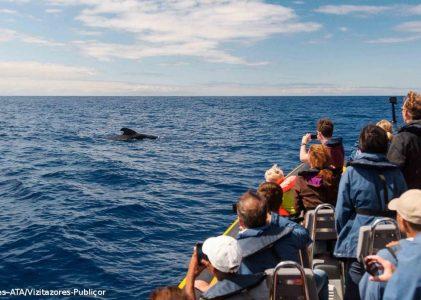 Bruxelas pede que Portugal e outros 21 países acabem com capturas acidentais de golfinhos