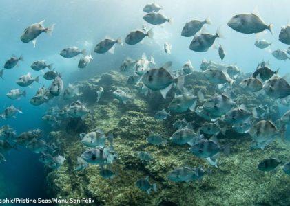 WWF. Europa falha metas para proteção dos oceanos