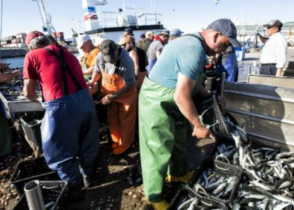 Peixe a mais? Governo proíbe pesca ao fim de semana