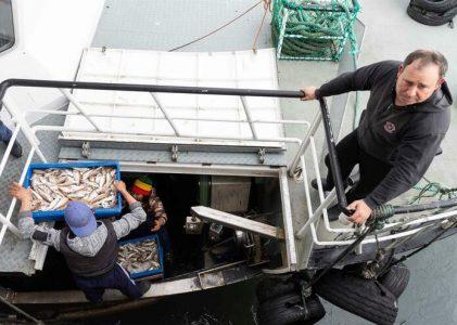 Quase três milhões de euros para proteger pesca da pandemia