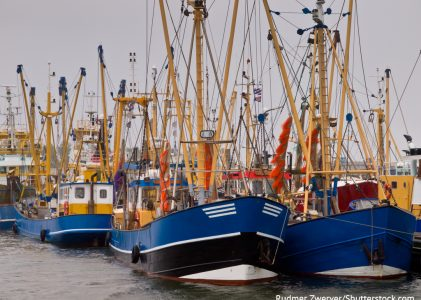 UE adota medidas de emergência para a pesca e a aquicultura