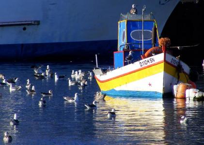 Apoios à cessação temporária da pesca com 7 ME de despesa pública